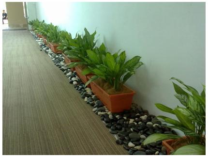 Green leaf plant rental services indoor plant rental - Green leafy indoor plants ...